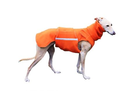 0greyhound_coat_12r.jpg